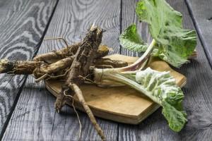 лопуховые корни - народные средства против кисты молочной железы